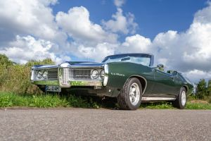 Pontiac auf der Wiese