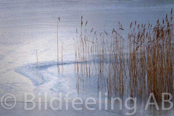 Vass i frusen sjö