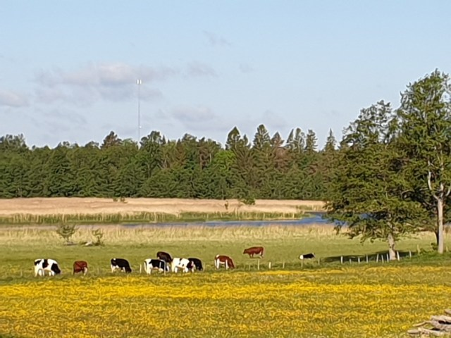 Bild från Bondskäret mot det planerade vindkraftverket. Bild: Yvette Heimbrand.