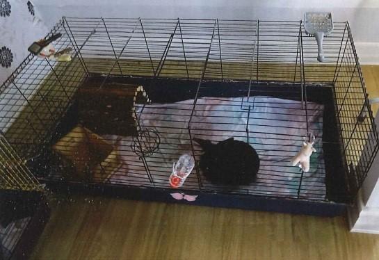 Bild från djurskyddskontrollen. Kaninbur med filtmaterial på botten, till stor del blöt.