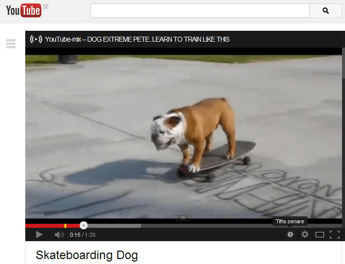 Video capture of bulldog skilfully controlling skateboard
