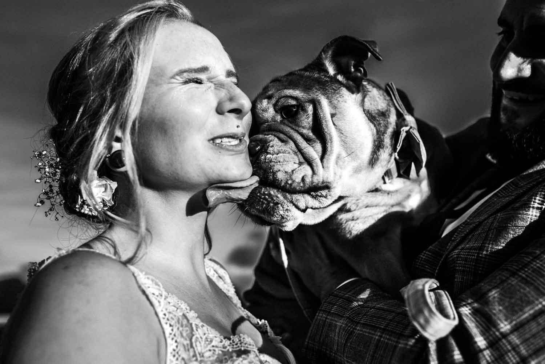 Boxer leckt Braut durchs Gesicht nach ihrer Trauung im Rathaus Remscheid