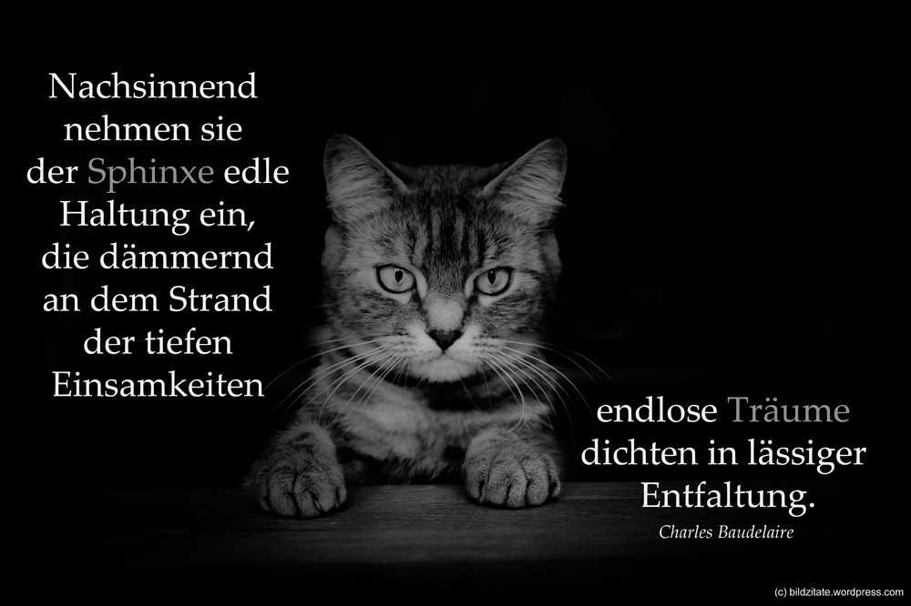 Sprüche Tod Katze