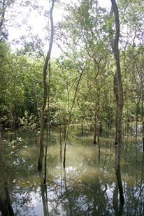 From the field: Collecting insects in mangroves (2/2)