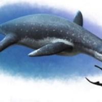 Otobüs Büyüklüğünde Deniz Sürüngeni Fosili Bulundu