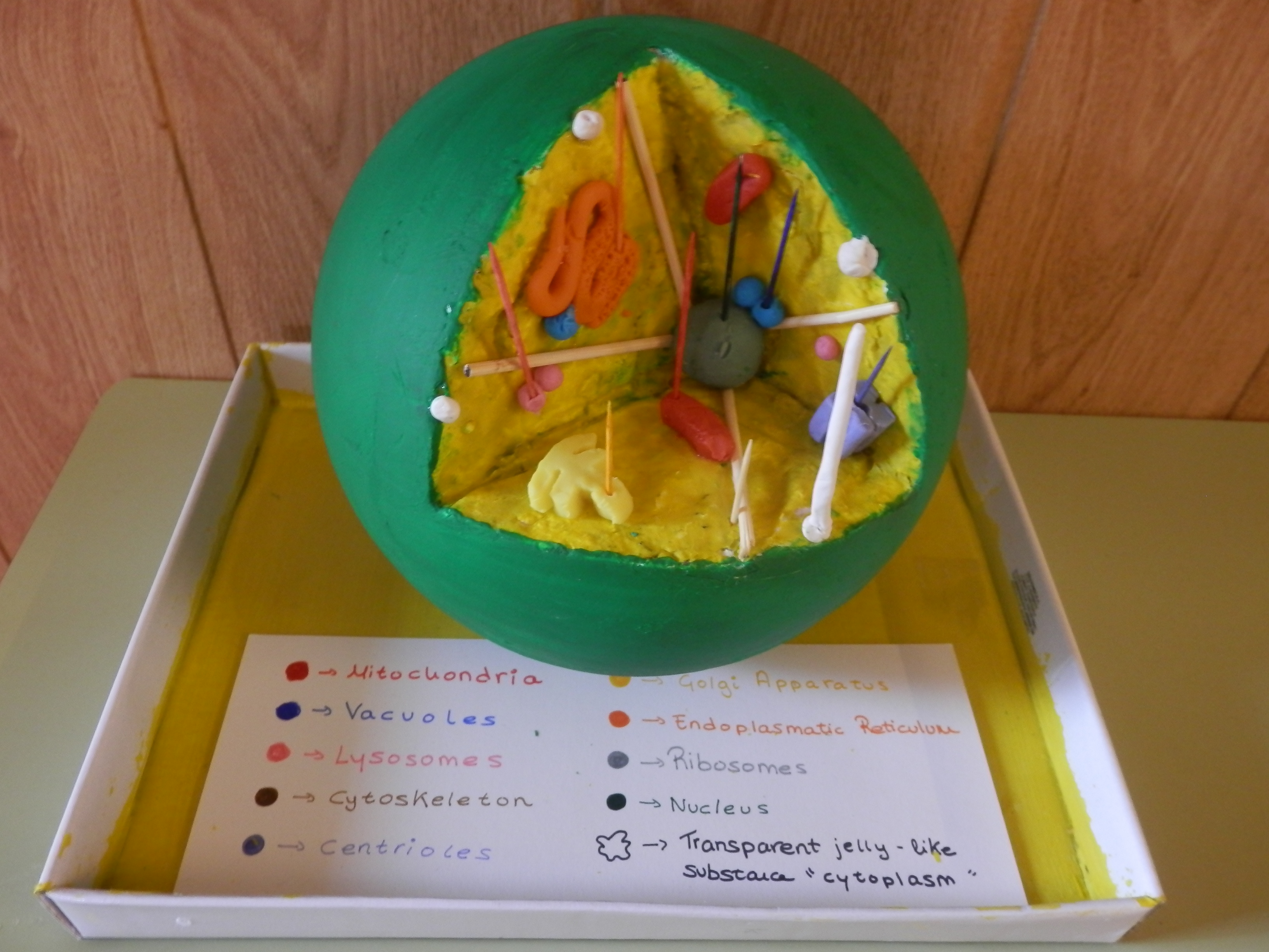Above A Plant Cell Diagram From A Science Fair Project