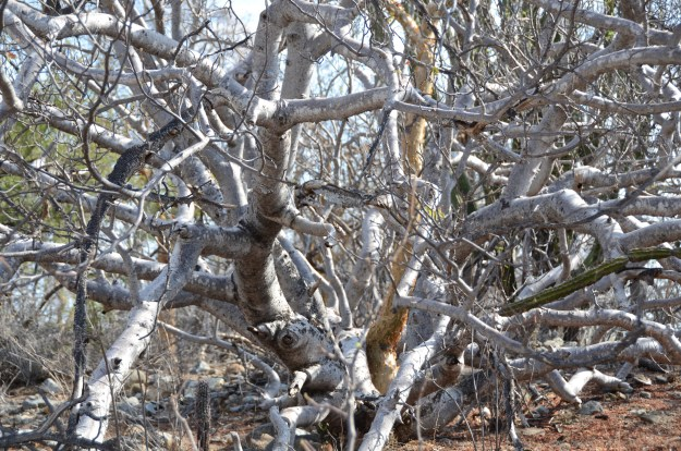 Scrubby trees