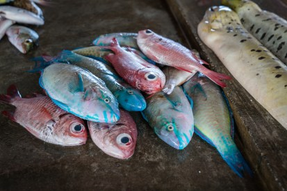 fish-eyes-kopi-port-moresby-papua-new-guinea