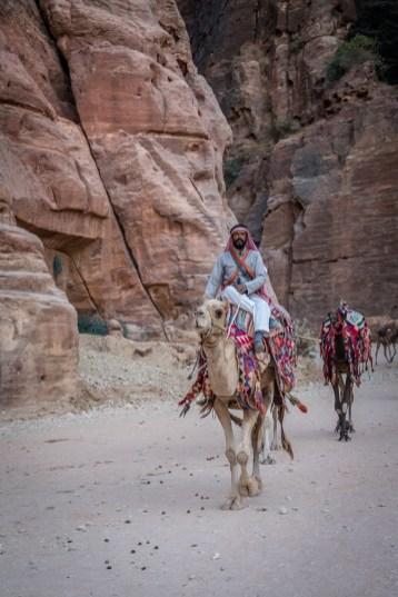 al-siq-camels-petra-jordan