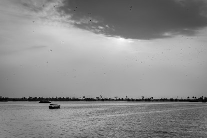 houseboat-alleppey-birds-vembanad-lake-backwaters-kochi-india