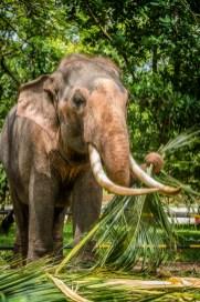 temple-elephant-sri-lanka
