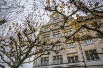 knarly-trees-winter-zurich