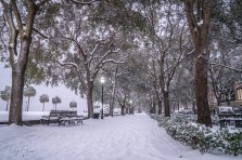 waterfront-park-charleston-snowy-winter
