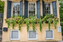 windowbox-charleston-flowers-greenery