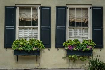 windowbox-charleston-flowers