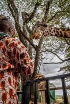 giraffe-looking-down-lady