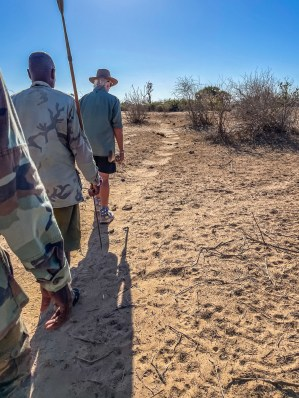 Following the animal trail