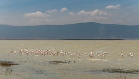 ngorongoro-crater-paige-shaw-September 19, 2021-18