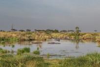 serengeti-paige-shaw-September 19, 2021-4