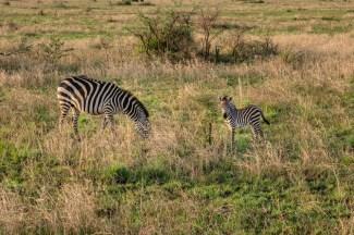 serengeti-paige-shaw-September 19, 2021-6