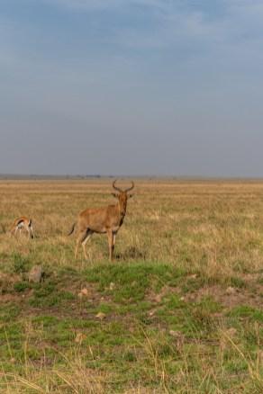 serengeti-paige-shaw-September 19, 2021