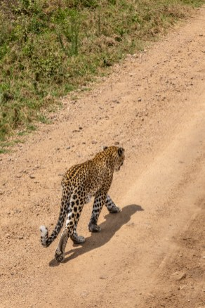 serengeti-paige-shaw-September 20, 2021-17