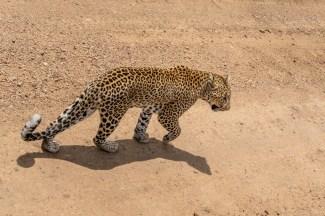 serengeti-paige-shaw-September 20, 2021-18