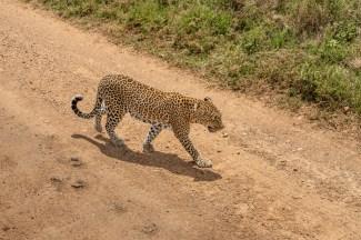 serengeti-paige-shaw-September 20, 2021-19
