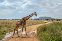 serengeti-paige-shaw-September 20, 2021-26