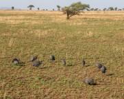 serengeti-paige-shaw-September 20, 2021