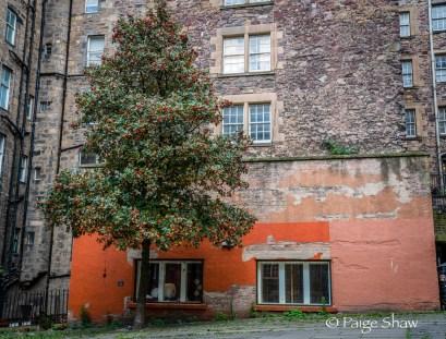 Orange on Orange Edinburgh