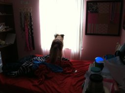 Page watching for intruders from my daughter's bed. Good dog!