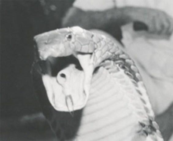 """Resultado de imagen de William E. """"Bill"""" Haast"""