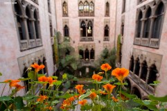 """""""Nasturtiums are shown in the courtyard during a Friends of Fenway Court Patron Nasturtium Party at the Isabella Stewart Gardner Museum in Boston, Massachusetts Wednesday, April 1, 2015."""""""
