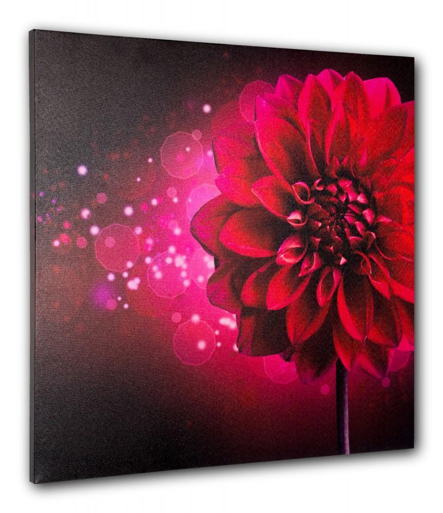 Wandbild Fotodruck Keilrahmen Bild Blume pink Dahlie