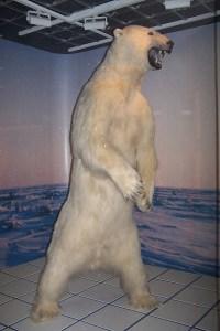 A Polar Bear Fell On Me