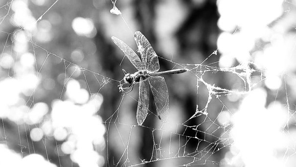 IN A SPIDERS WEB