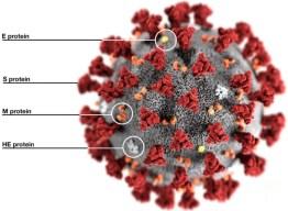Coronavirus spikes