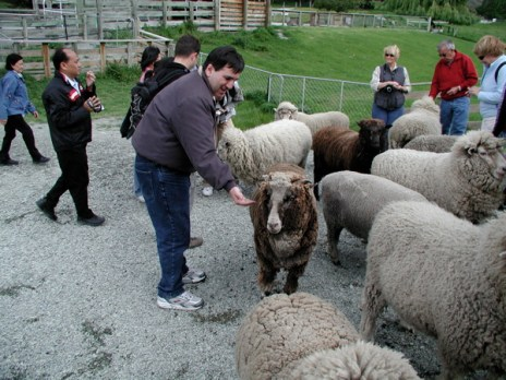 bill_fattening_the_friendly_sheep