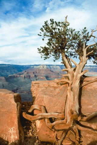 Grand Canyon, Arizona, North America