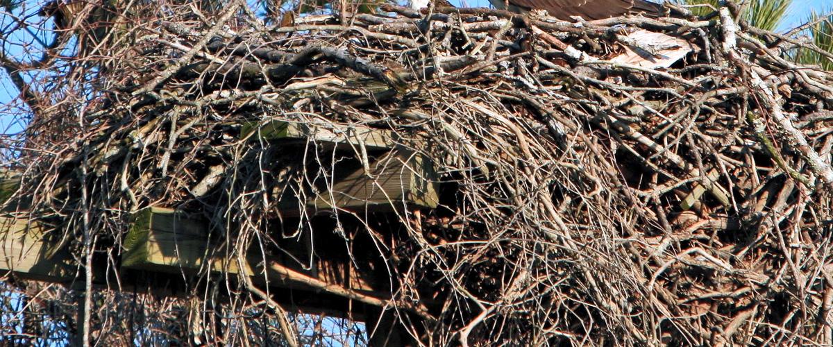 Shirley Jackson and The Bird's Nest