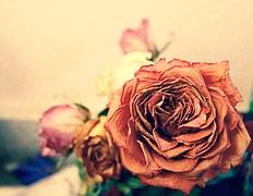Death (flower)