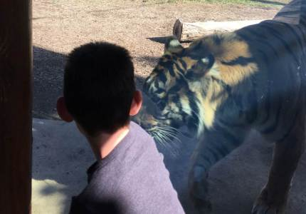 billy horton blog connor sees himself as a tiger