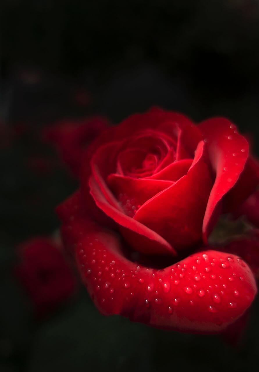 花-随拍 Flowers – Snapshot