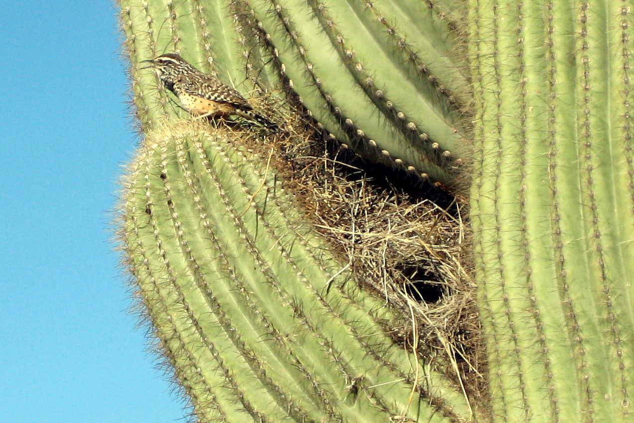 Desert Biome ThingLink