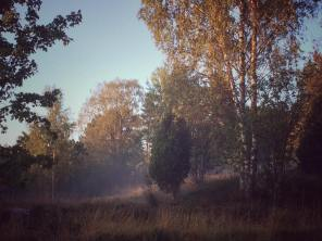 Morgondimman i soluppgången