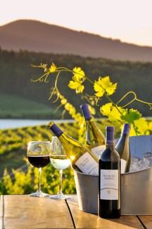 Biltmore' Vineyards Biltmore