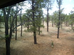 Grand Canyon - View from our Bedroom
