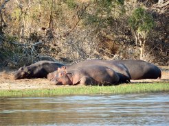 Kruger National Park - Lake Panic
