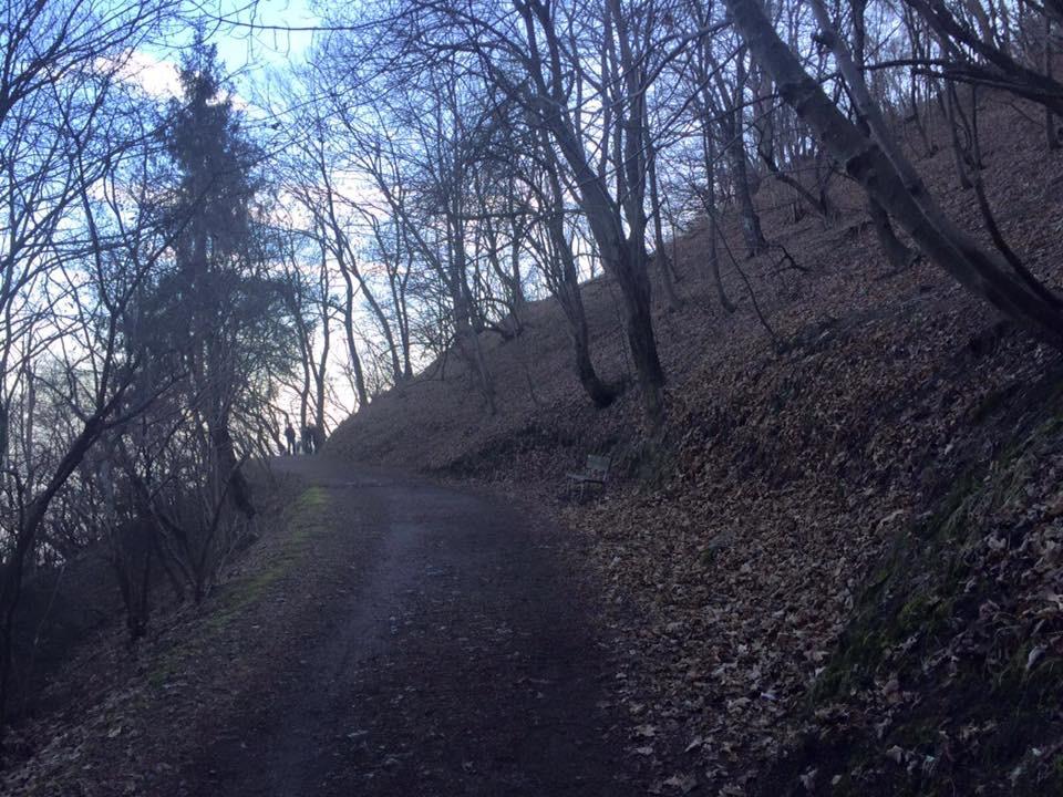 Sentiero verso il Monte Bolettone